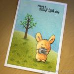 Bunny photographer