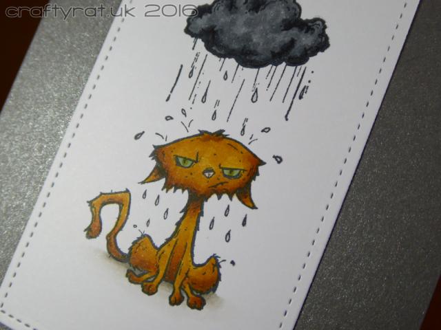 rainy-cat-detail